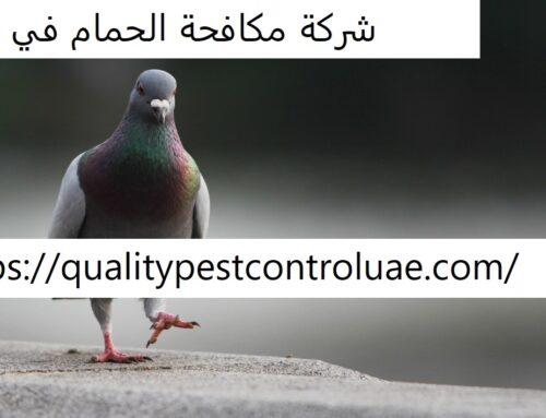 شركة مكافحة الحمام في دبي  0545307678  طارد للحمام