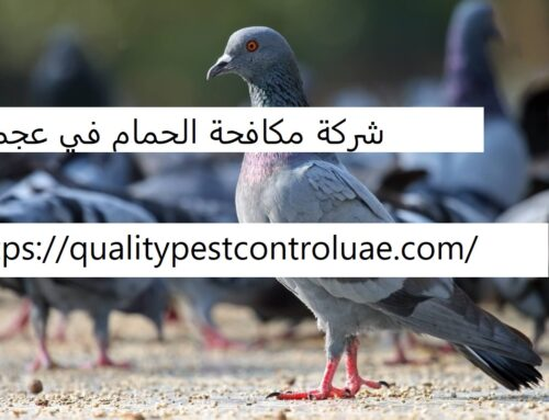 شركة مكافحة الحمام في عجمان  0545307678  تركيب اشواك