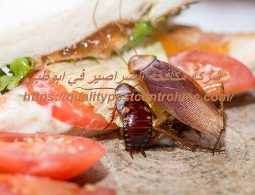 شركة مكافحة الصراصير في ابوظبي |0545307678| ابادة تامة