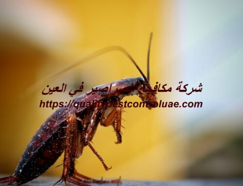 شركة مكافحة الصراصير في العين |0545307678| رش مبيدات
