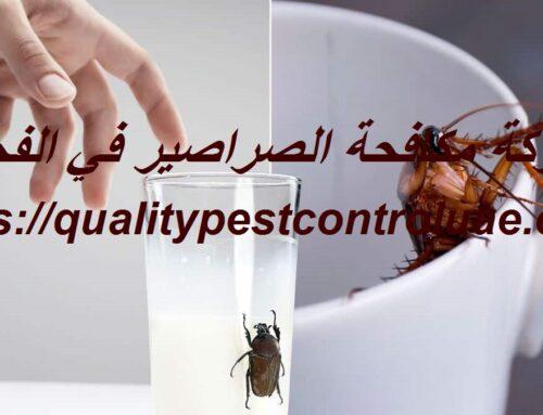 شركة مكافحة الصراصير في الفجيرة |0545307678| رش صراصير