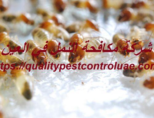 شركة مكافحة النمل في العين |0545307678| النمل الأبيض