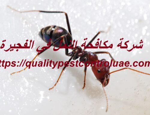 شركة مكافحة النمل في الفجيرة  0545307678  رش نمل