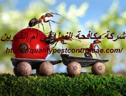 شركة مكافحة النمل في ام القيوين |0545307678| ابادة
