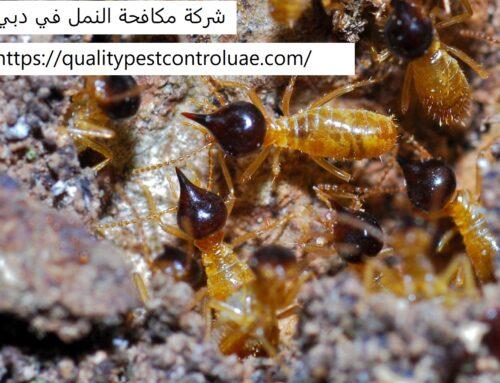 شركة مكافحة النمل في دبي |0545307678| طرد النمل