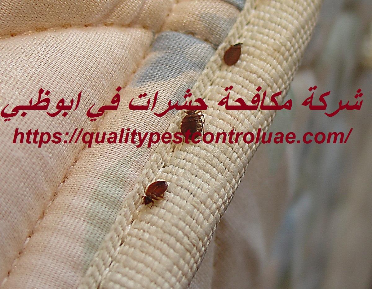 شركة مكافحة حشرات في ابوظبي