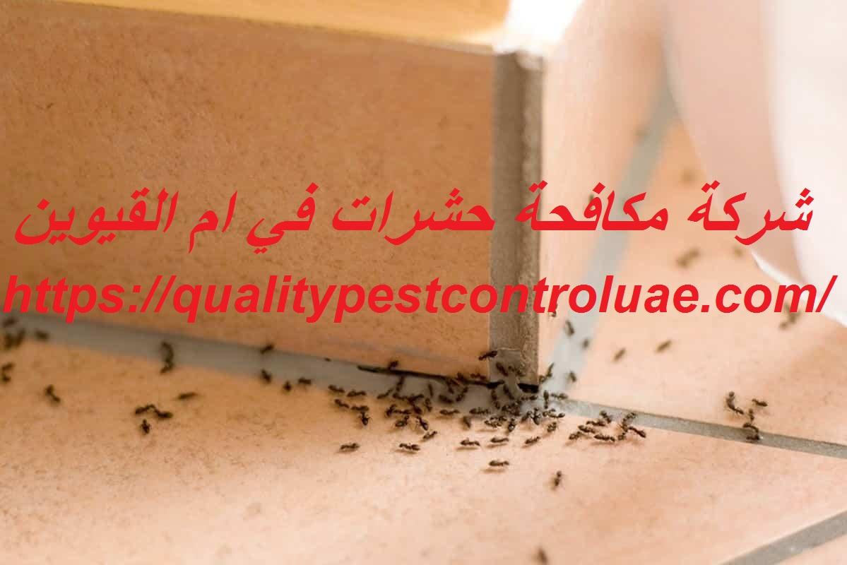 شركة مكافحة حشرات في ام القيوين